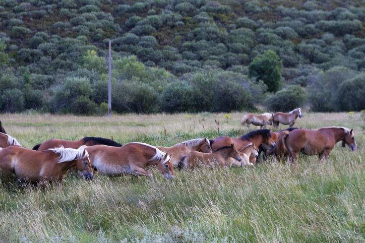 Wild horses at Babia, Leon (Spain)