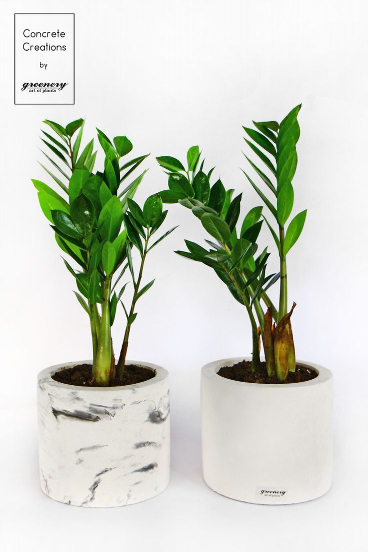 Add greenery to your space! #greenery #concrete #plants #greece