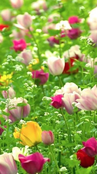 I just love tulips and wildflowers.