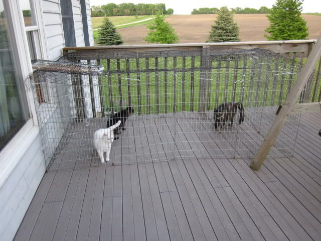17 Best Images About Cat Enclosures On Pinterest Outdoor