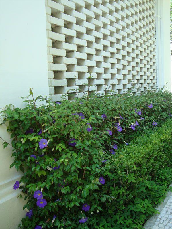 1000 ideias sobre plantas de sol pleno no pinterest - Plantas para pleno sol ...