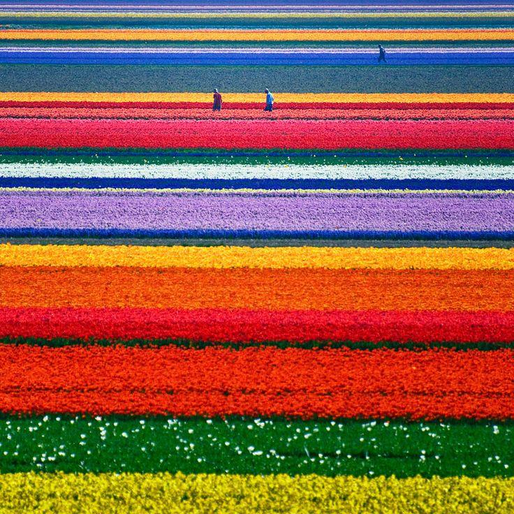 On the next visit.....tulip fields