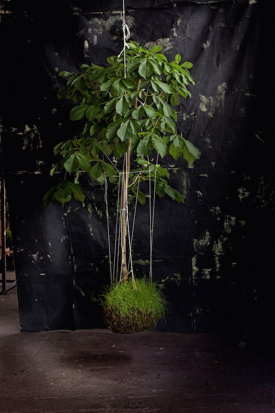 PS: What's the most unwieldy or large plant that you've transformed into a string garden?  FV: My horse chestnut tree. I played a lot under chestnut trees in the town I grew up in. It's my favorite tree. Photo courtesy of Miep Jukeema