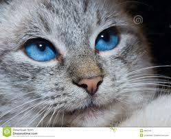 afbeeldingen katten - Google zoeken
