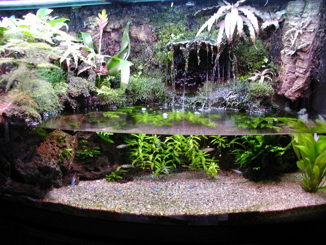 Dendrobatidae and paracheirodon innesi paludarium for Aquarium waterfall decoration