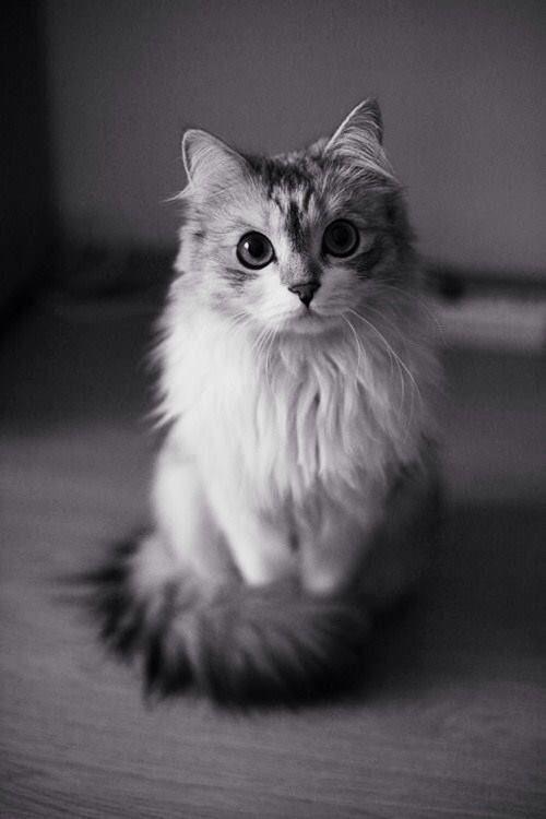 This Cat is Beautiful! - Imgur