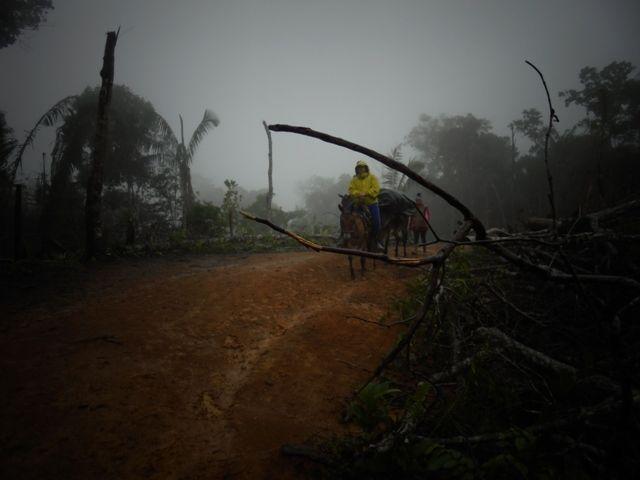 IAP, caracterización biológica. En el camino, bajo la lluvia.