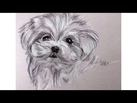 Best 25 Como dibujar un perro ideas on Pinterest  Cmo dibujar