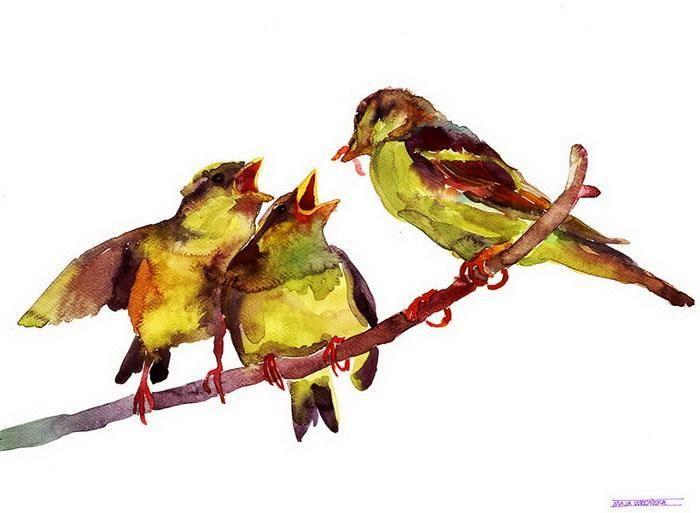 Акварельные птицы Maja Wrońska http://artlabirint.ru/akvarelnye-pticy-maja-wronska/  Акварельные птицы Maja Wrońska будто прям сейчас слетят с листа. {{AutoHashTags}}