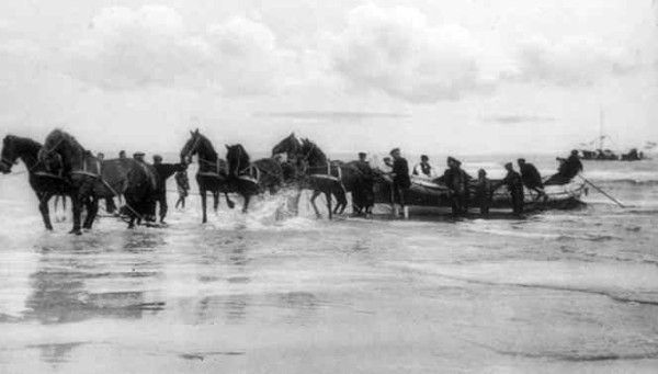 Terschelling, NL 1900 with 12 Frisian horses