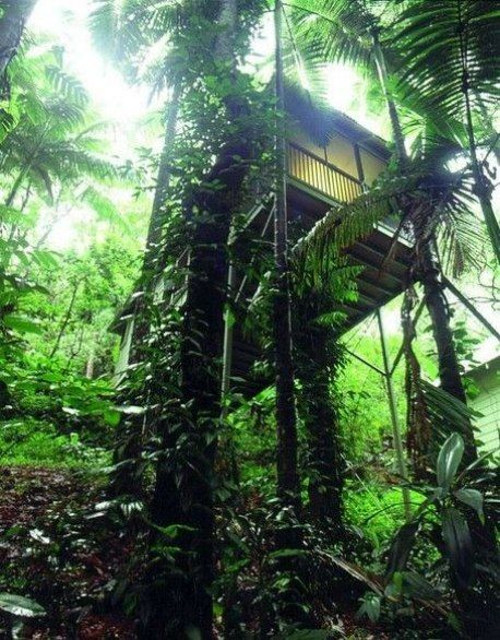 DAINTREE ECO LODGE & SPA Daintree, Australia Daintree Eco Lodge is located in the world's oldest living rainforest. From one of the lodge's 15 bayans, visitors can take in some of the nearly 450 bird species that call the Greater Daintree Rainforest home.