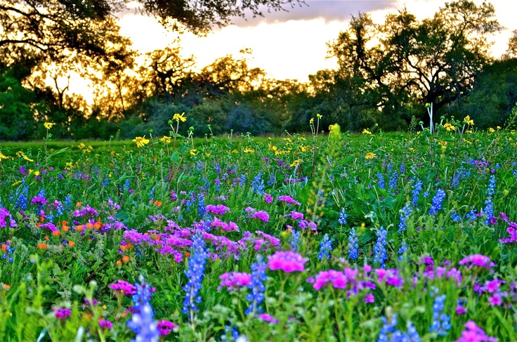 I absolutely love this time of year because of the beauty and color of the Texas wild flowers