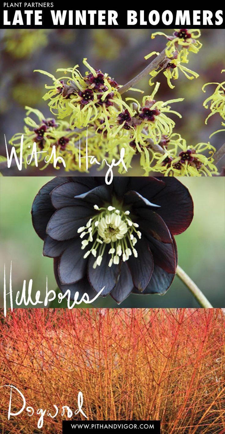 5155 best garden images on pinterest plants gardening and flowers