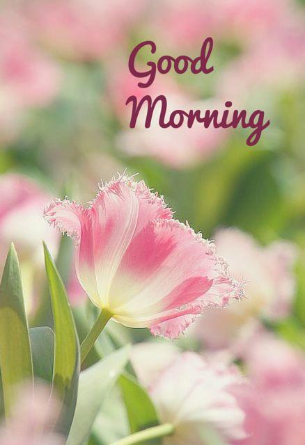 Good Morning! click to see more good morning pins!