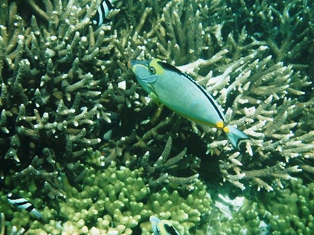 Guam. Spent a 12 hour layover snorkeling