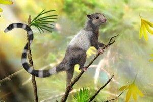 """El Universal 140911 - Ciencia - Descubren tres especies de """"ardillas"""" jurásicas"""