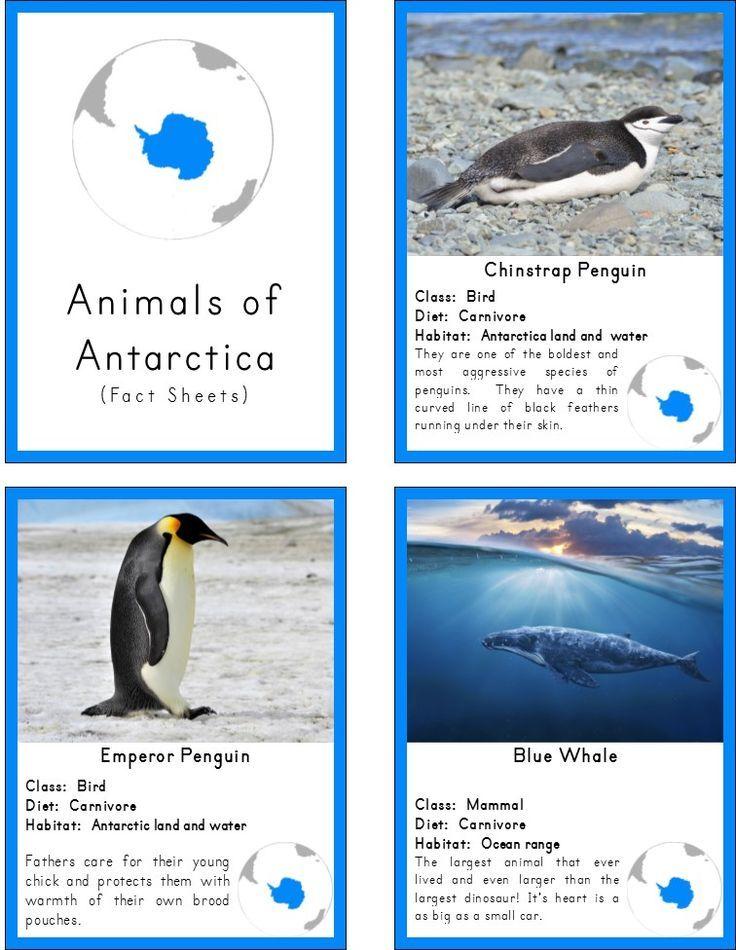 69 best animals around the world images on pinterest