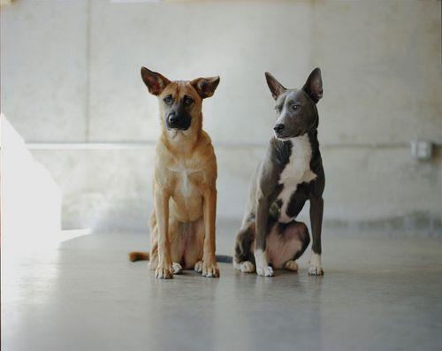Cat Friendly Rescue Dogs Lancashire