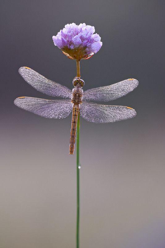 Imagen de una libélula