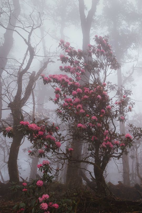 Fighting through the forest fog, Nepal by Dmitry Kupratsevich. expressions-of-nature