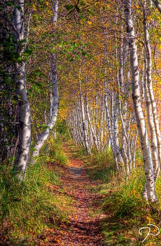 Path through the Woods by Jim Dollar