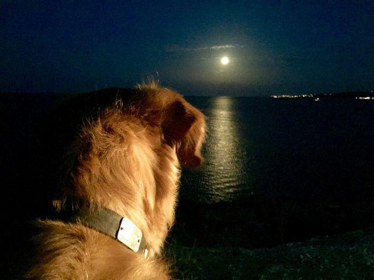 golden moonlight