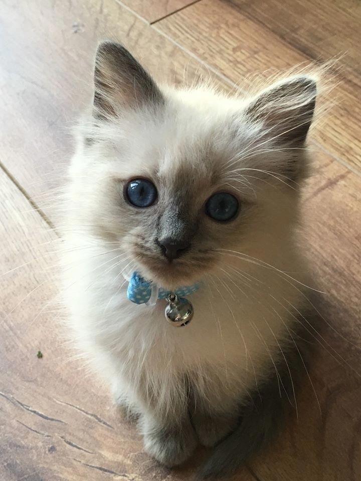 Und wie man mit absoluter Liebe direkt in deine Seele starrt. #Kätzchen   – Katzenbabys