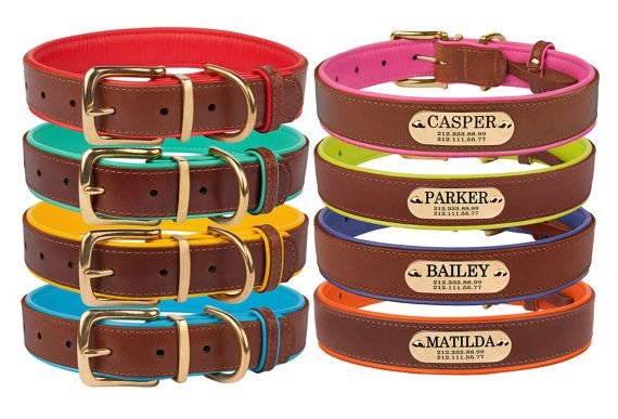 Brass Buckle Leather Dog Collar Personalized Nameplate Laser Engraved Small Medium Large Soft Padded