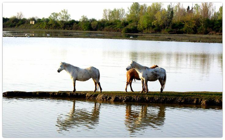 Cavalli di Isola della Cona by Sansecondo  on 500px