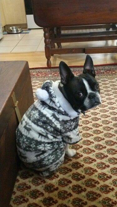MoZart in his onesie