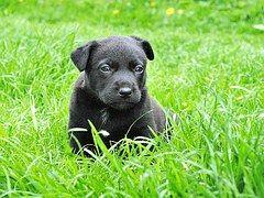 Cão, Filhote De Cachorro