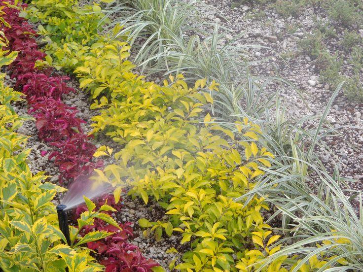 Sistema de riego en jardines con plantas diversas.