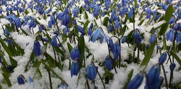 Glory Of The Snow | Stunning Winter Garden Plants For A Dazzling Landscape