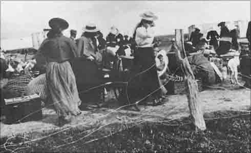 Boer+women+entering+a+concentration+camp.jpg (490×300)