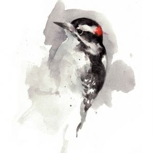 woodpecker watercolor painting - david scheirer