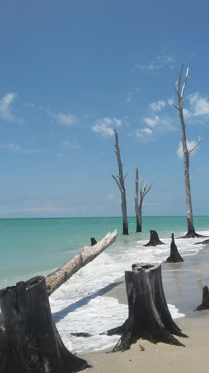 61 best Stump Pass Beach Englewood Florida images on ...