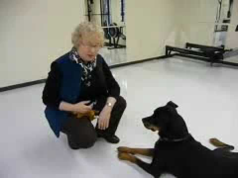 Pet Psychic Val Heart Demonstrates Animal Communicaion