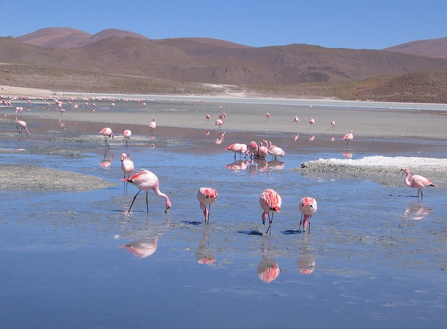 Uyuni, San pedro de Atacama. (M Montecino)