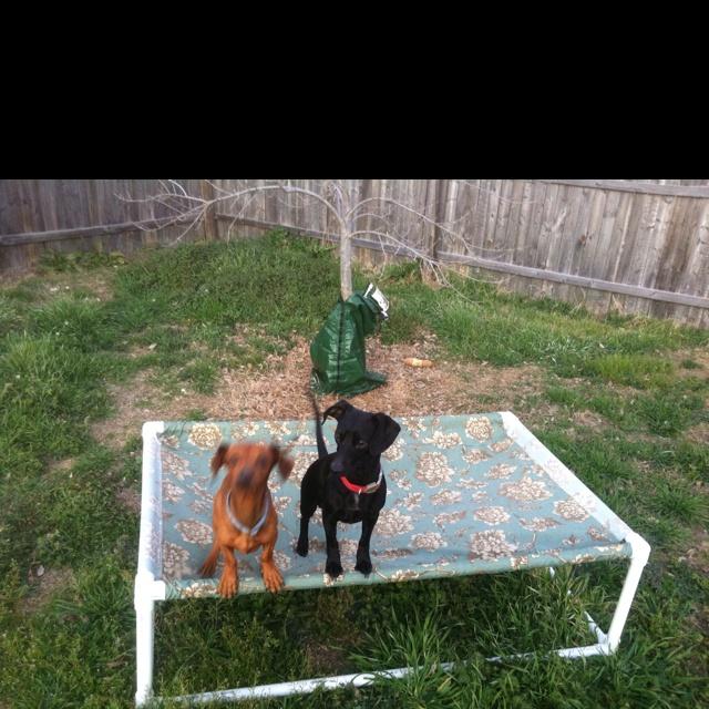 Best Dog Hammock