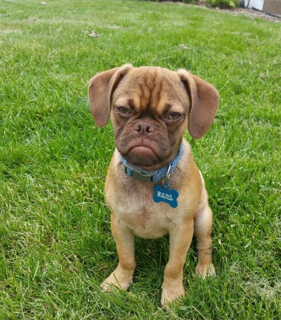 17 Grumpy Puppies Could you not???  I'm having a great time, can't you tell by my face? Or, I just love Mondays, can't you tell/