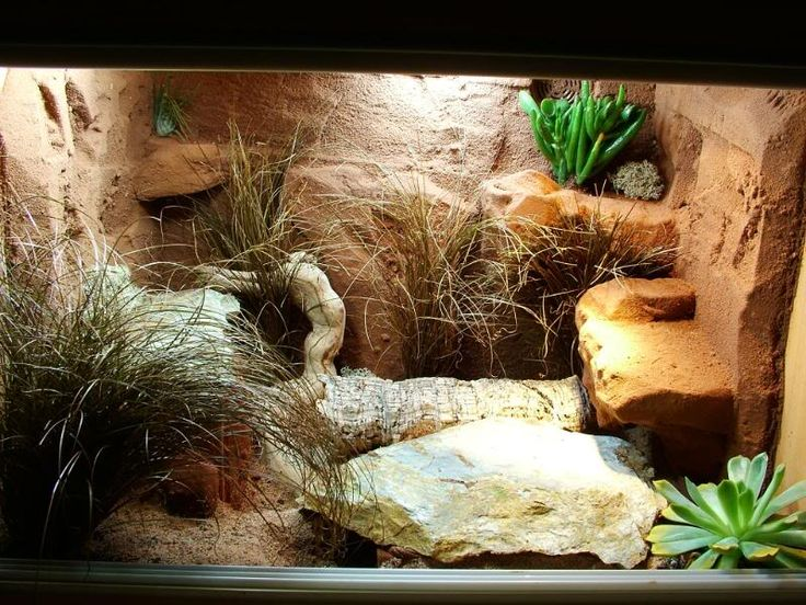 best leopard gecko viv  I want to build this for my Arya!