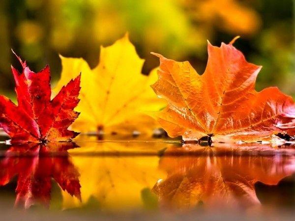 Fall Leaves Desktop Wallpaper Backgrouns Feuilles D Automne Sous La Pluie Paysage Automne Sc 232 Nes