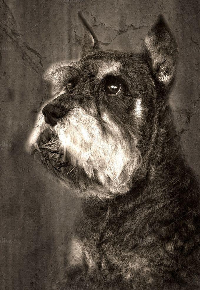 Schnauzer dog by huertas19 on @creativemarket