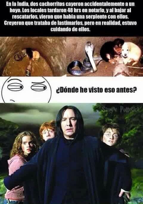 Snape XD