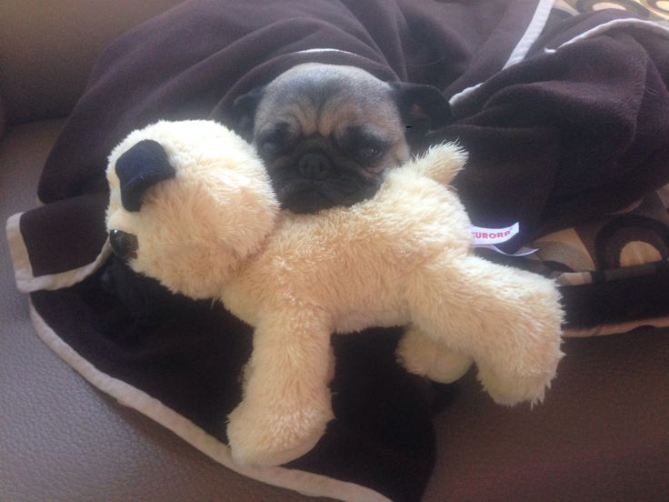 Lulu and her stuffy