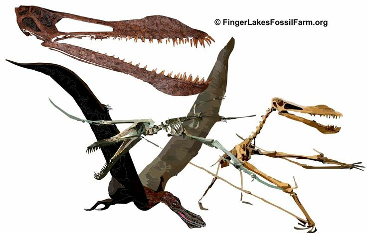 news pterosaur flying reptile museum exhibit paleontology science