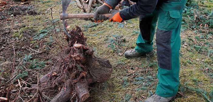 Enlever une souche d'arbre : https://www.forumbricolage.fr/fiches-travaux/enlever-souche-arbre