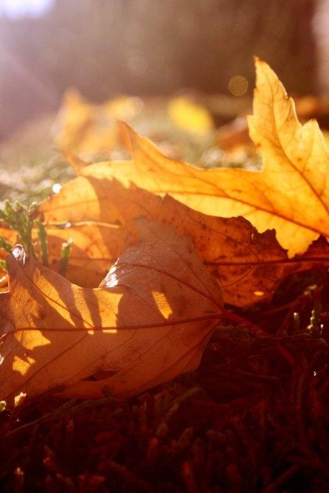 Autumn Morning: Fall Leaves, Autumn Leaves, Autumn Mornings, Orange Leaves, Autumn Fal, Autumn Beautiful, Fall Autumn, Autumn Sunlight, Fallen Leaves