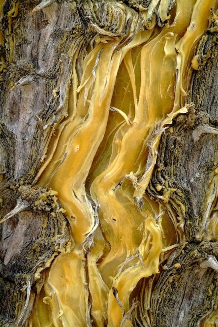 French photographer Cedric Pollet travels the world to capture the beauty of tree bark and has documented it in his new book, Bark: An Intimate Look at the World's Trees.
