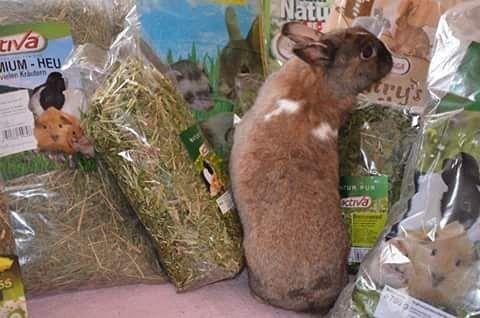 More gifts for us <3 @malgosiasrabbitshelter #Hase #Kaninchen #кроль #whiterabbit #兔子 #králík #kanin #jänis #lapin #κουνέλι #kelinci #conejo #ウサギ #兎 #うさぎ #doadopcji #nofilter #króliczek #krolik #l4l #like4like #likeforlike #rabbit #rabbits #bunny #bunnies #rescue